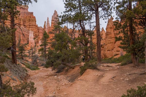 Im Tal des Bryce Canyon